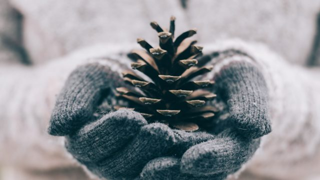 gloved hands holding pinecone