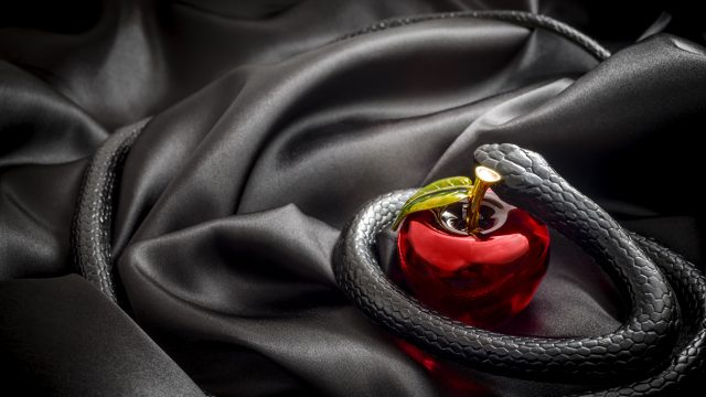 Black snake and apple on top of a black silk sheet